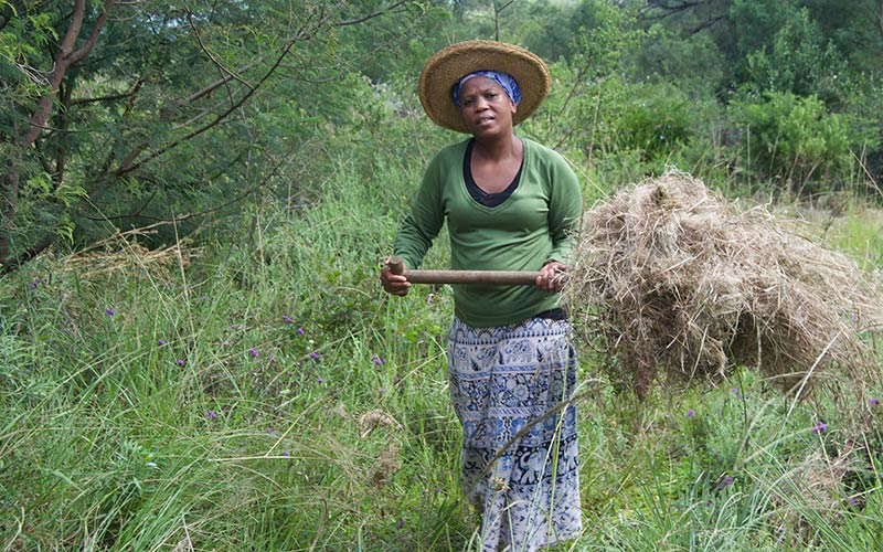 A woman carries a pile of dried grass.
