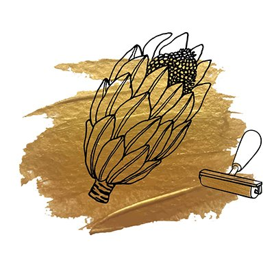 Illustration of a protea flower.
